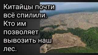 Китайцы почти всё спилили. Кто Китаю позволяет вывозить наш лес.