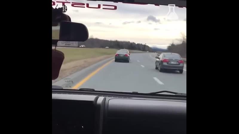 Упёртые бараны на дороге в Америке