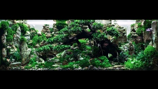 THE 450 LITERS CONTEST-LEVEL AQUASCAPE WITH RELAXATION MUSIC - 2 HOUR 4K CINEMATIC