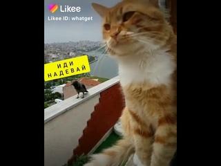 Смешное видео ДО СЛЁЗ 😂😂😂! - Чёрный кот