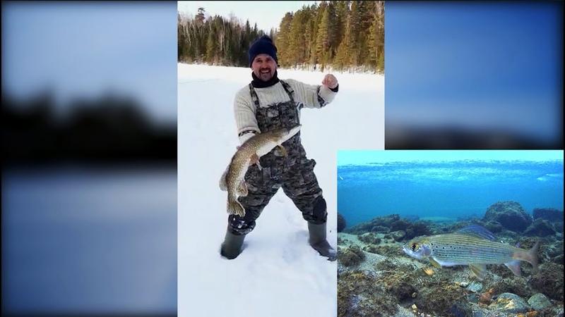 Вылазка на рыбалку таежные водоемы в глухозимье Река озеро хариус щука