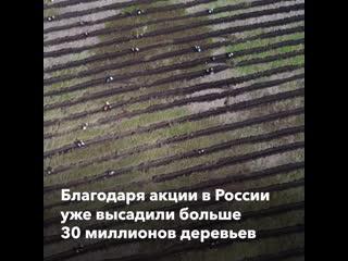 Акция Сохраним лес проходит в Волгограде на Мамаевом кургане