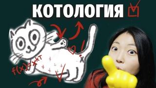 КАК МЯУКАТЬ И ТЫГЫДЫКАТЬ ПО-КОРЕЙСКИ? Урок корейской котологии