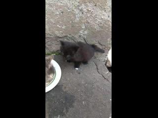Выкинули домашних малышей к бездомным кошкам...
