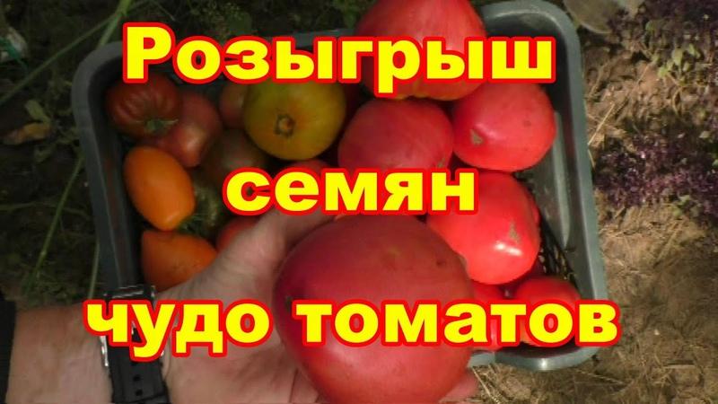 Розыгрыш семян томатов и подарки друзьям