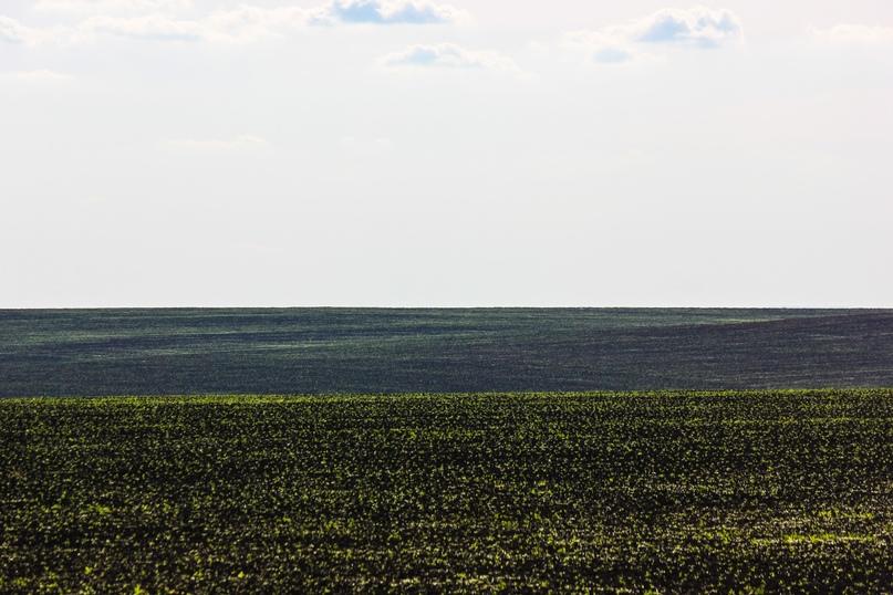 Экспедиционная оценка эффективности землепользования в Оренбуржье, изображение №12
