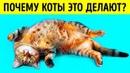 Почему кошки ложатся на спину при виде вас