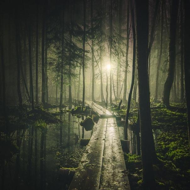 Портал в лесу События, о которых пойдет речь, произошли в начале 1980-х годов. Михаил взял отпуск и решил провести часть его в тайге вместе с другом Василием и его 17-летним сыном Костей. Стоял