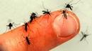 Sivrisineklerden Kolayca Kurtulmanın 10 Yolu