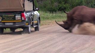 Сумасшедшие Атаки Носорога, Снятые на Камеру