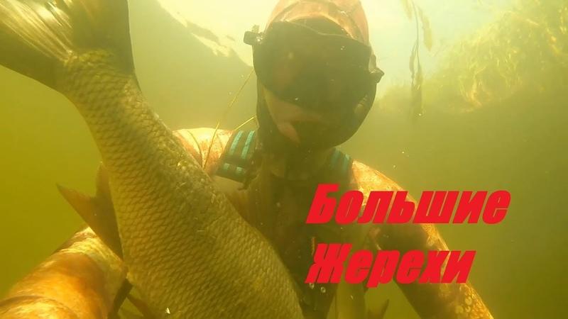 Вот это КайфПрозрак и Большие Жерехи!подводная охота на малой реке.