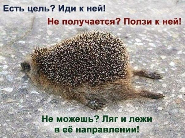 Фото №456239591 со страницы Сергея Малюкина