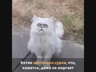 Самый страшный котик в мире