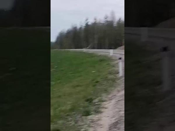 Встретили медведя