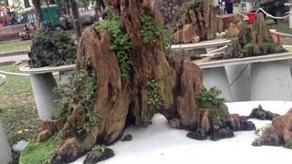 Vietnam Penjing 2017 part 1