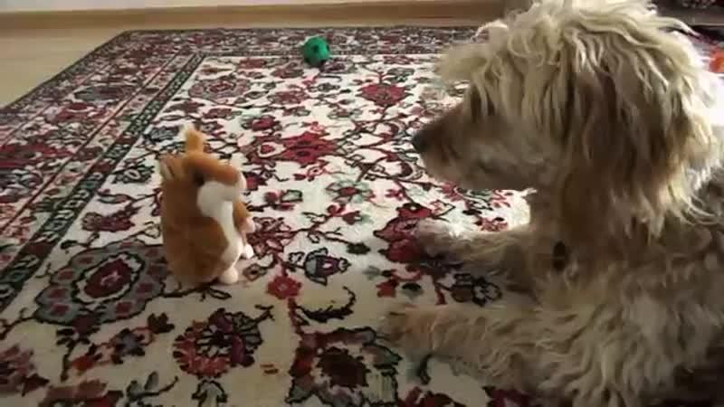 Собака ругается с говорящим хомяком