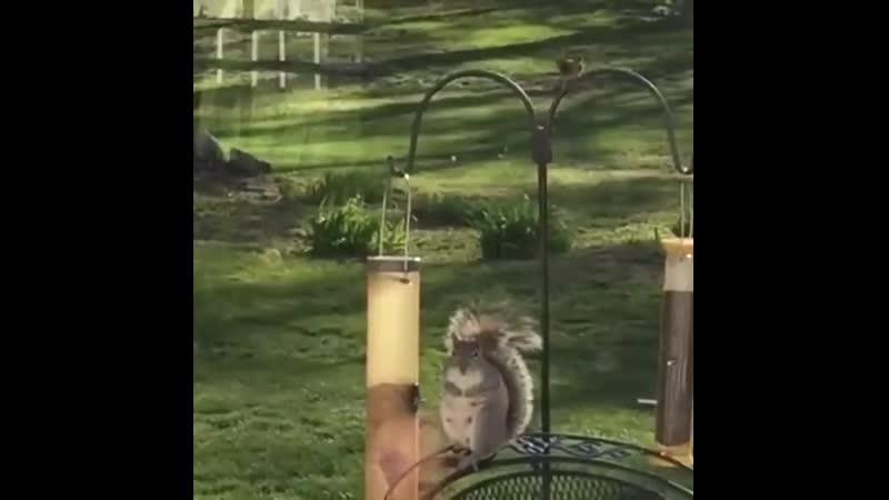 -Чирик! Машка! Иди отсюда, это моё место!