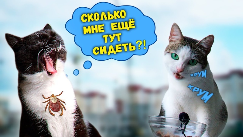 Давайте съездим в гости К КОТУ из прошлого видео Приколы с животными SANI vlog