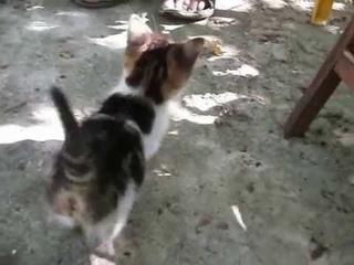 creeping kitten 3