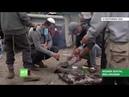 Des centaines de pèlerins hassidiques bloqués à la frontière entre la Biélorussie et l'Ukraine