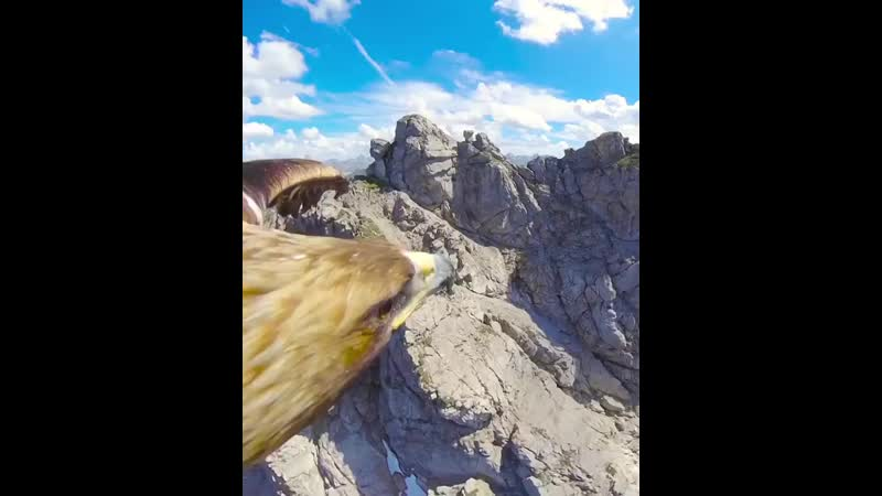 A birds eye view of the Alps doesn't get any better than this heart eyes eagle mountain ️ Follow @nat 800 X 640 mp4