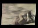мега прикол, обезьяны убегают на кабане, неуловимые мстители