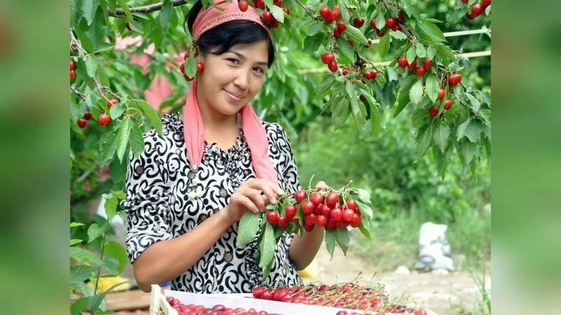 Salam Salam Родной Узбекистан 🇺🇿💙