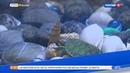 Красноухих черепах спасут от истребления, передача Утро России