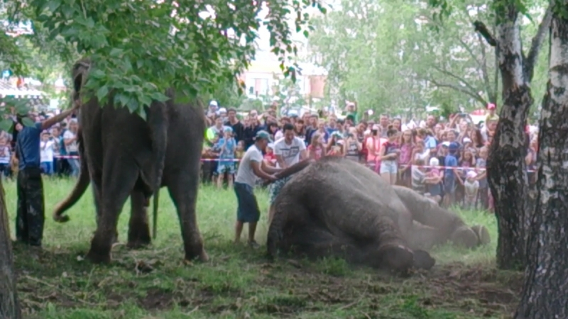 Пятитонные слонихи Дженни и Магда в Саду Победы 3