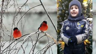"""Н.Нищева """"Снегири""""- читает Смирнов Матвей #ЗимнийФлешмобrukbibka"""