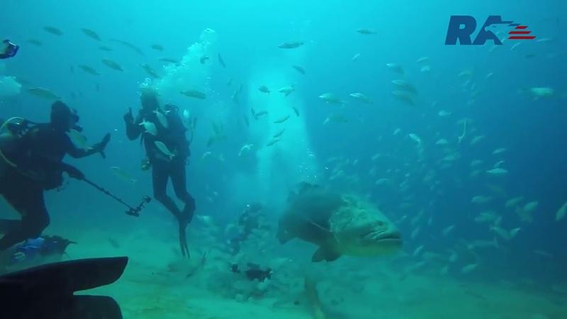Гигантская рыба съела акулу Russian America TV