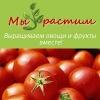 Мы растим! Выращивание растений, выращивание томатов, выращивание огурцов,