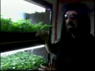 Хорхе сервантес высший пилотаж выращивания марихуаны как и когда высаживать коноплю