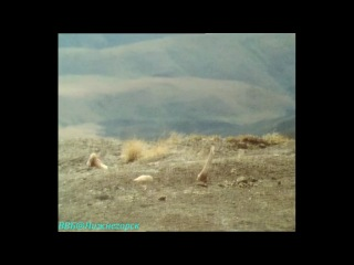 BBC Живая планета Портрет Земли 07 Небо над нами Документальный 1984