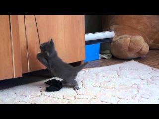very frisky kitten [очень резвый котёнок]