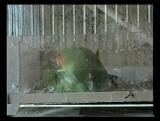 01.Мои попугаи-2007 г.