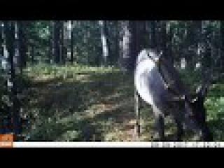 У леса на опушке, стоит фотоловушка и к ней не зарастает звериная тропа