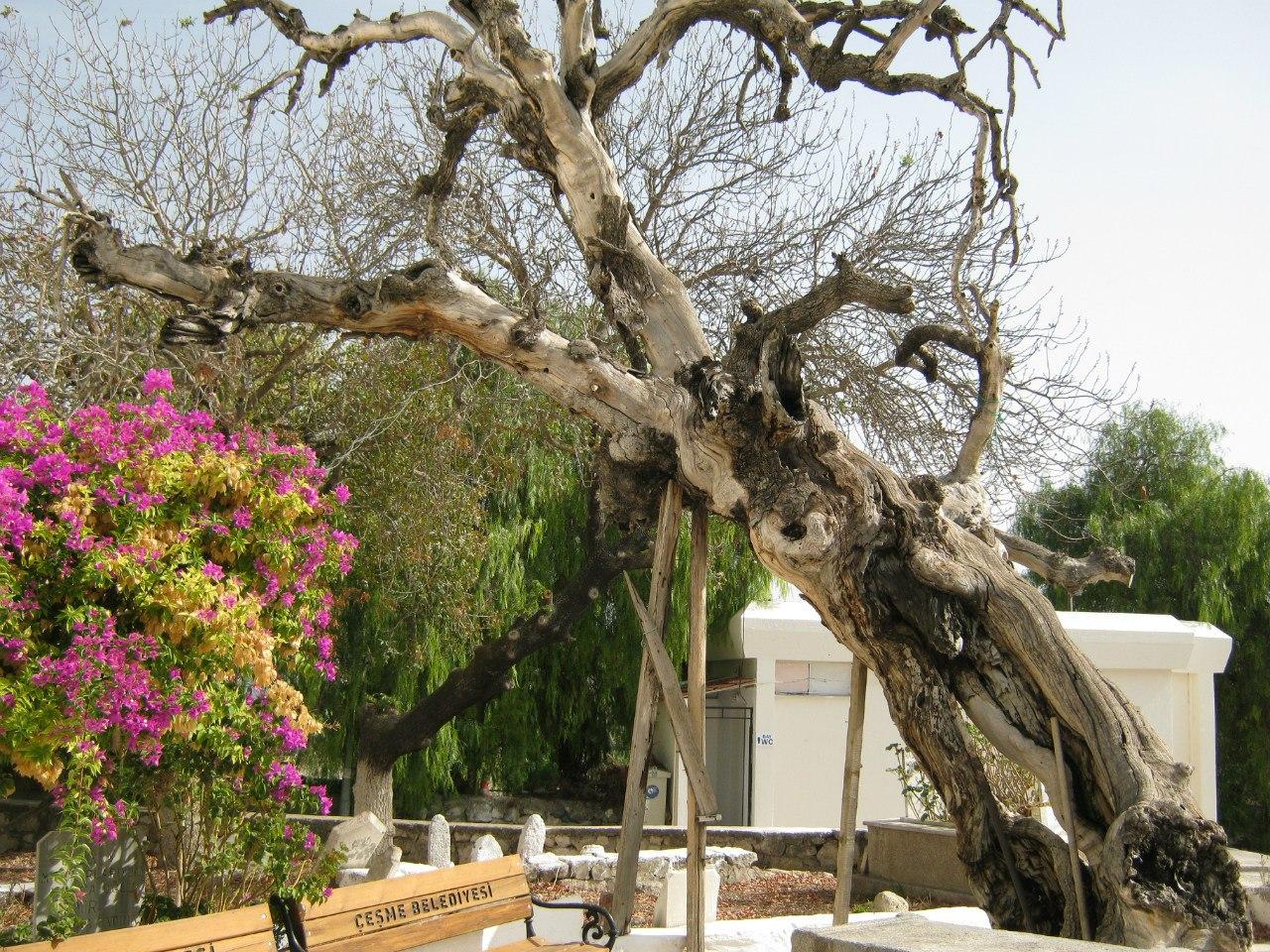 В Турции деревья пользуются уважением и почётом