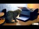 Свежие приколы с кошкам прикольные видео с кошками с животными