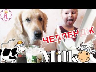 Молочный челлендж золотистый ретривер Граф и Алиса пьют молоко на скорость Milk Challenge Dogs Kids