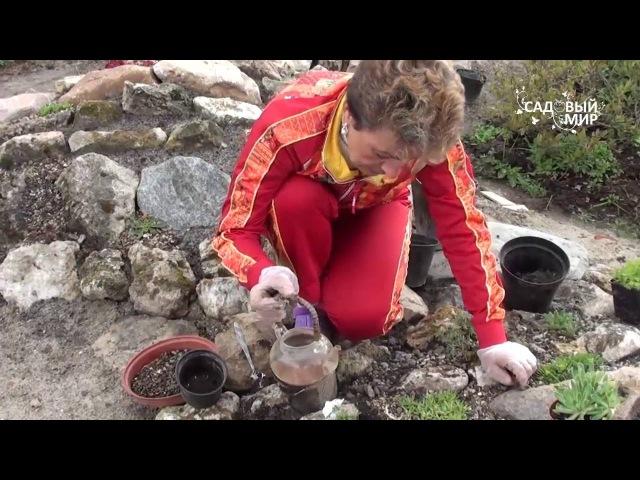 Как сделать альпийскую горку. Альпинарий своими руками