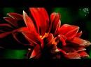 Для тебя .Распускаются цветы, красота неописуемая.