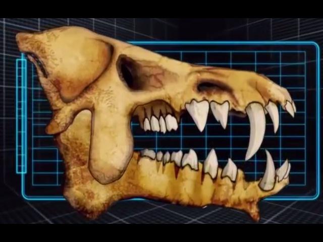 Доисторические хищники Адский кабан Документальные фильмы Nat Geo Wild HD