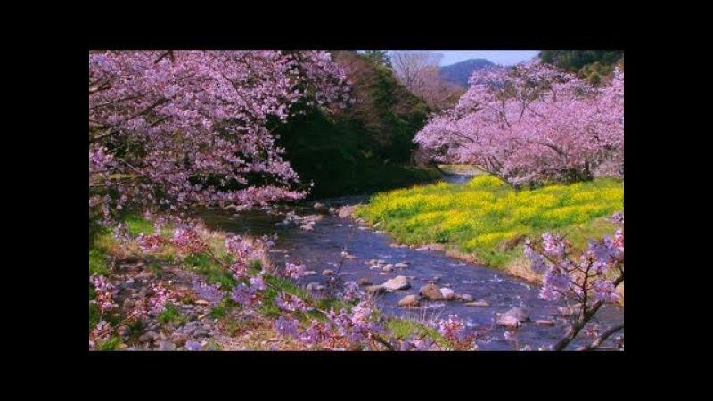 2 Hours long play 〜Relaxing Music〜Calming Music〜癒しの音楽 感動の風景 自然風景