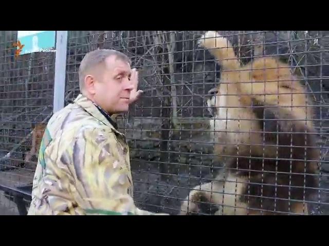 Конфликт с Поклонской Зубков зовет на помощь льва