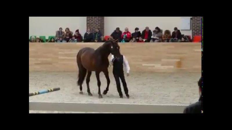 Шоу выводка жеребцов Феофан Грек