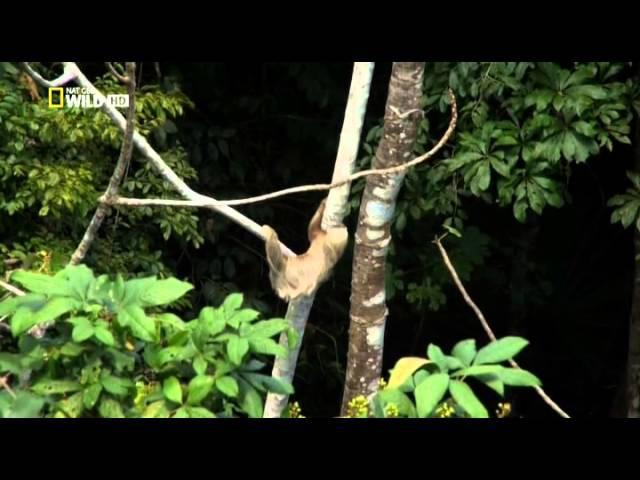 National Geographic Тайная жизнь хищников В лесах 4 серия в HD