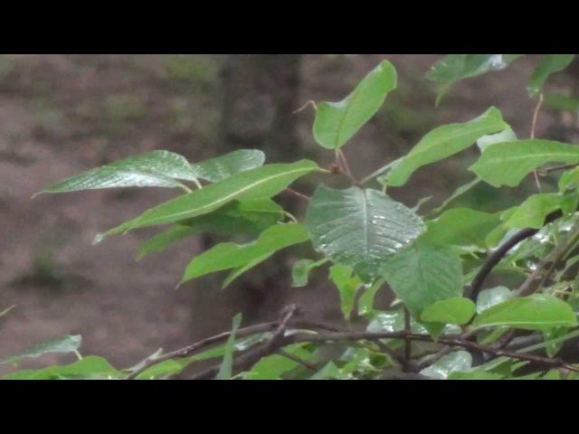 Видео с Цифрового Бинокля Sony DEV 50V Арстайл