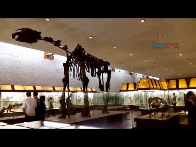 Moscow Paleontological Museum Moskova Dinazorları Paleontoloji Müzesi