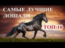 Топ 10 Самые дорогие и лучшие лошади мира Породы лошадей